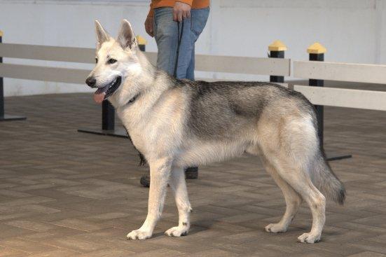 Volka